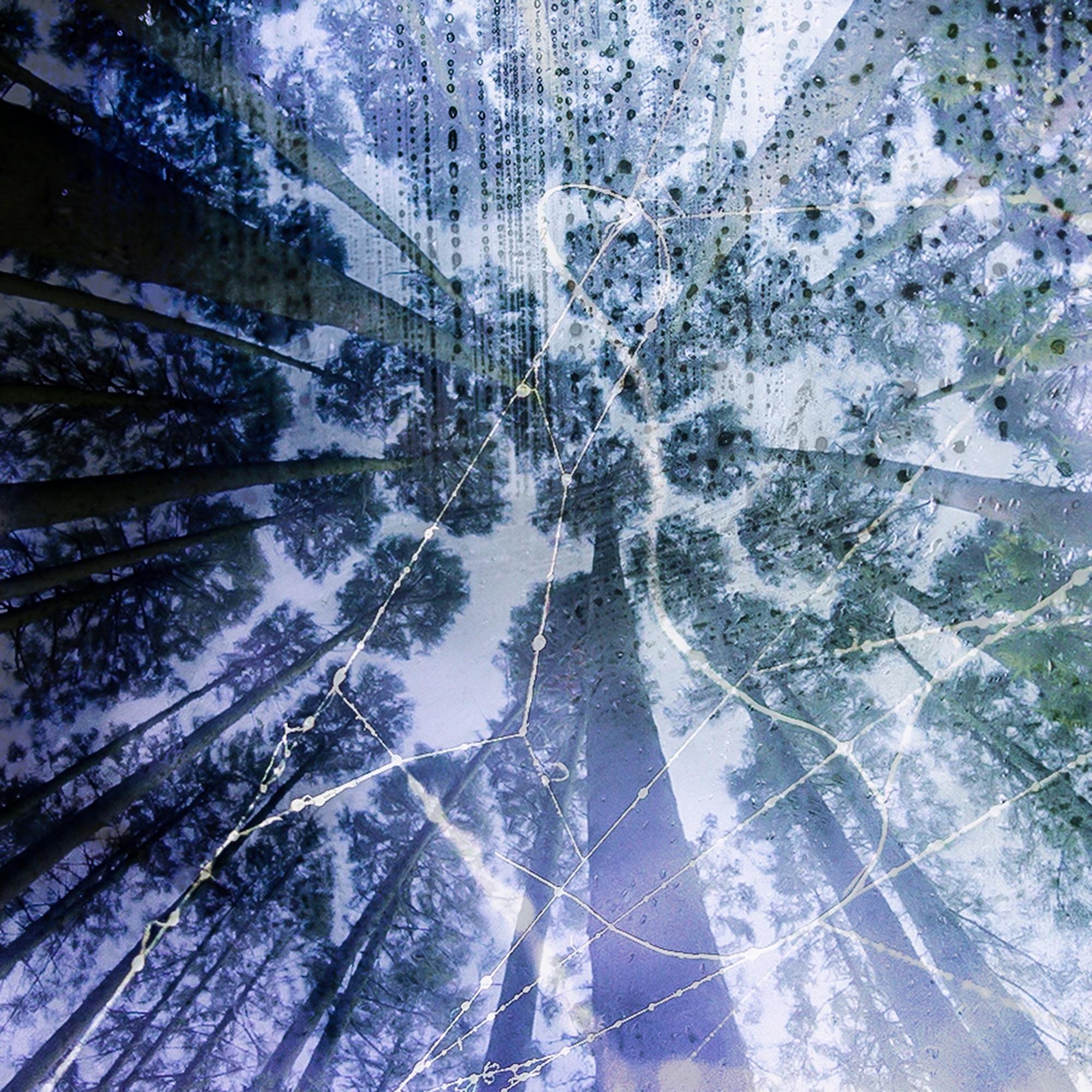 tsubaki-cover-art